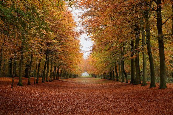 autumn-forest2.jpg