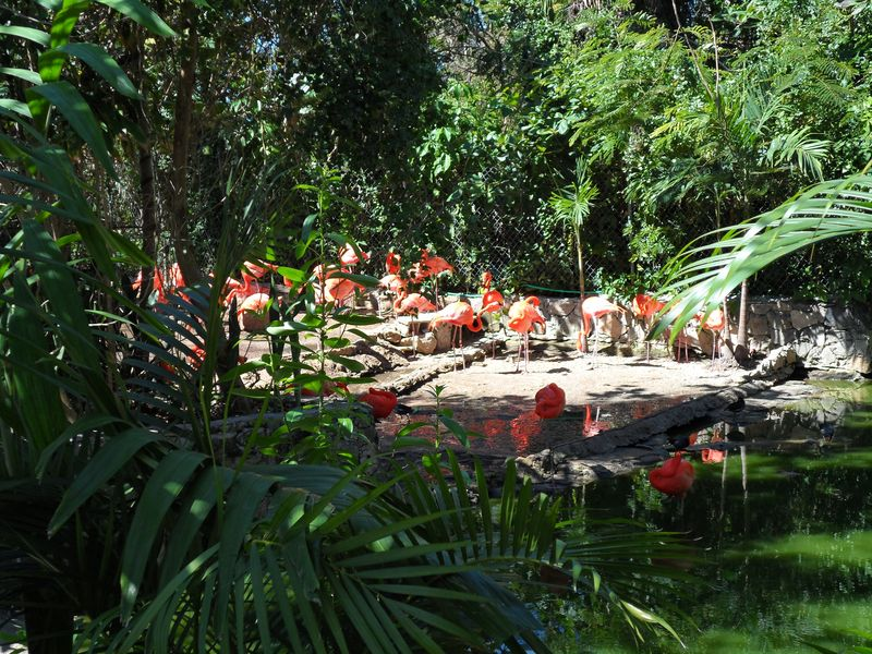 Flamingoes flocked in the water and shade