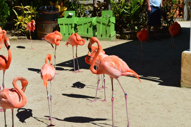 Flamingoes resting tend not to yield
