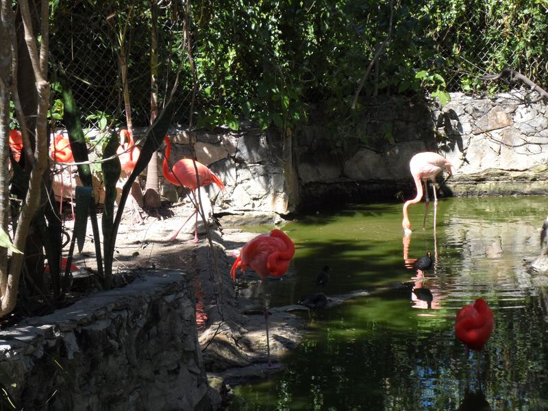 Flamingoes watering hole