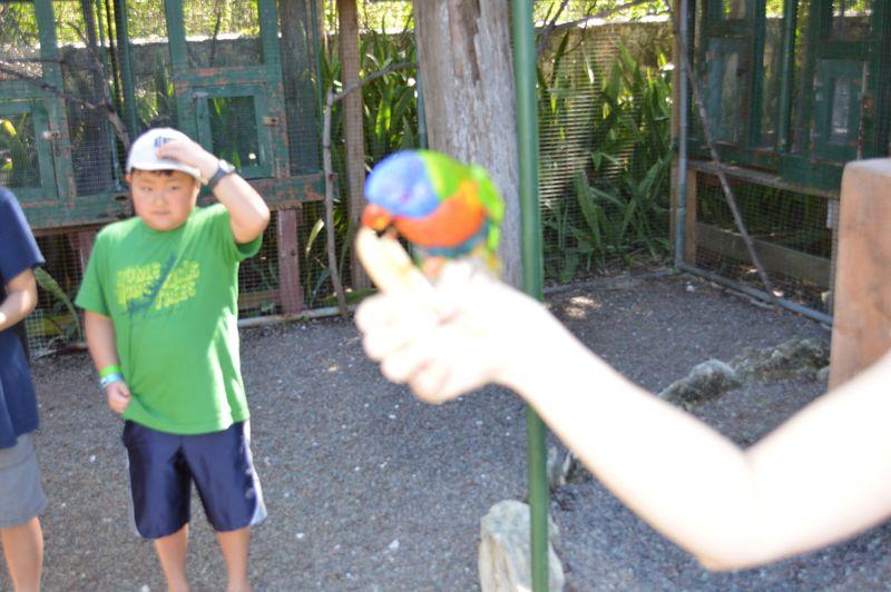 Lorry parrots