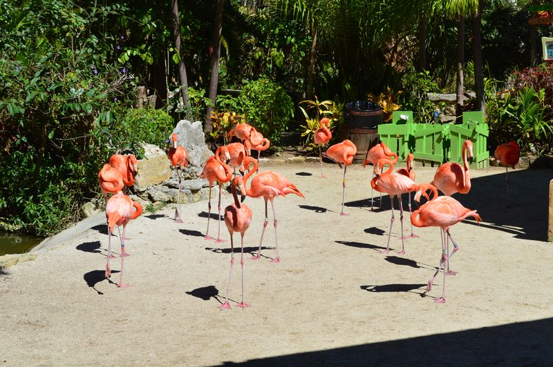 One flamingo approaches