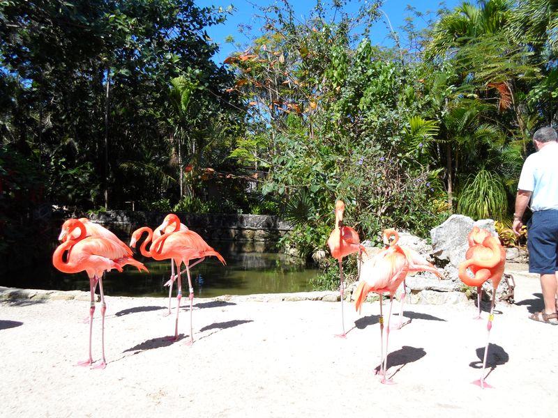 One legged flamingo resting