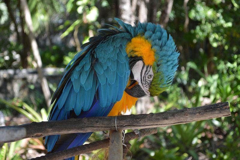 Parrot perched giving me a squawk