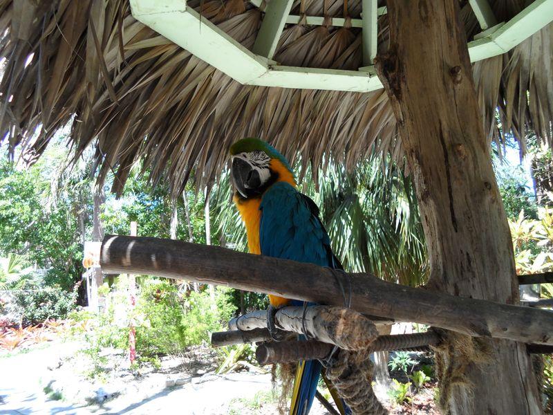 Parrot perches