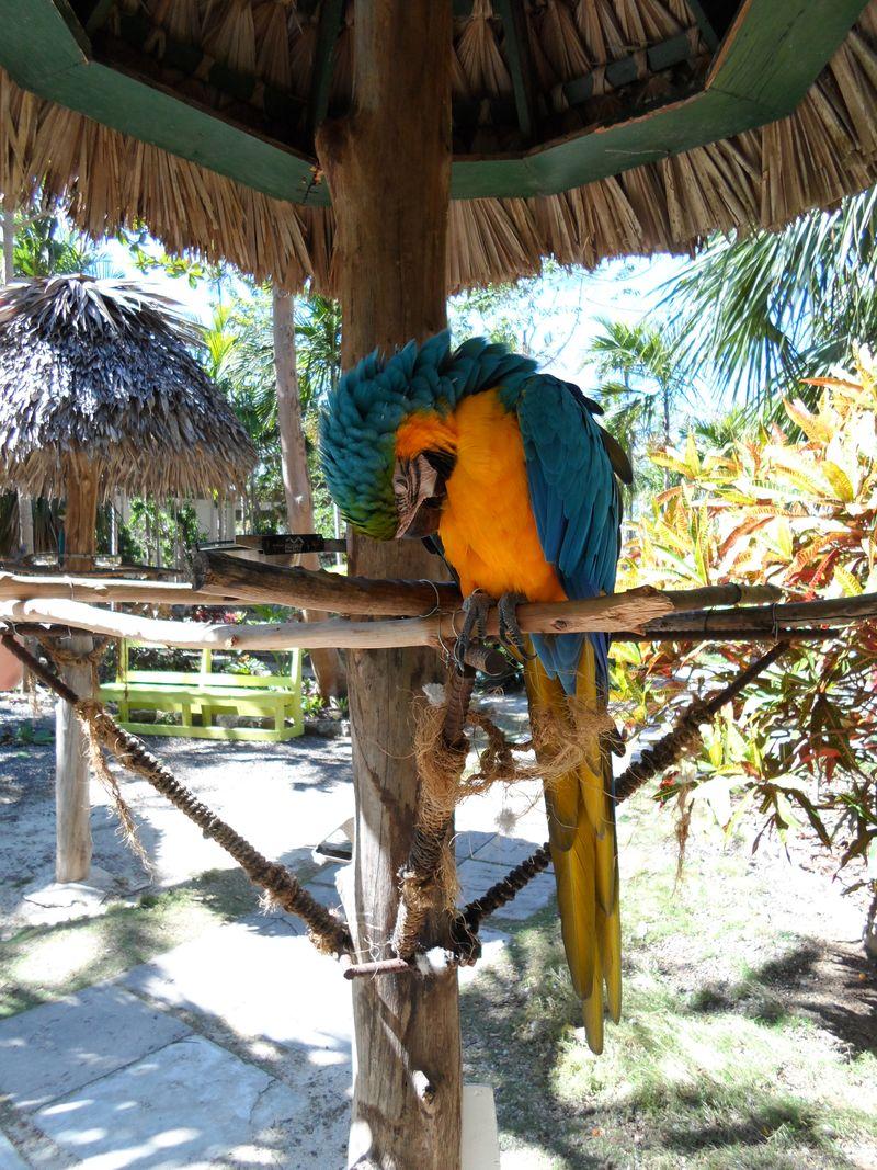 Parrot sleeping