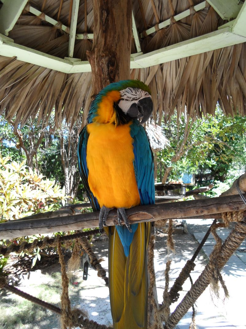 Parrot with eyes closed
