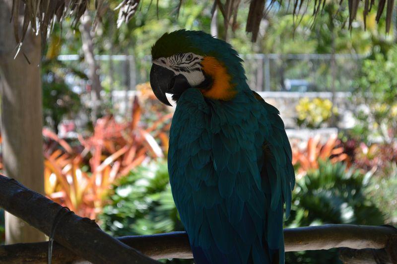 Unfriendly Parrot