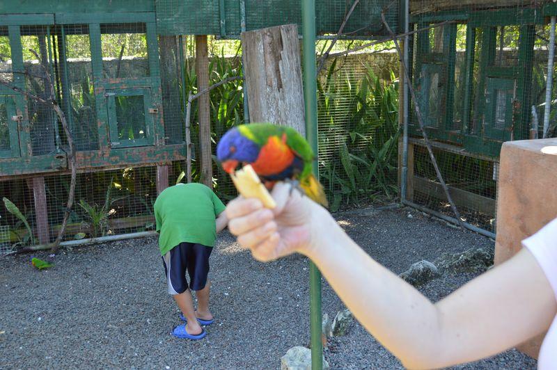 Bird feeding on apple