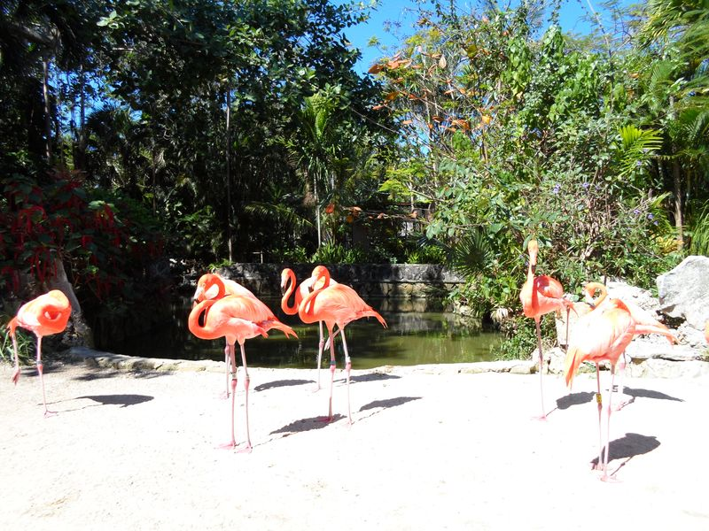Another view of Flamingoes