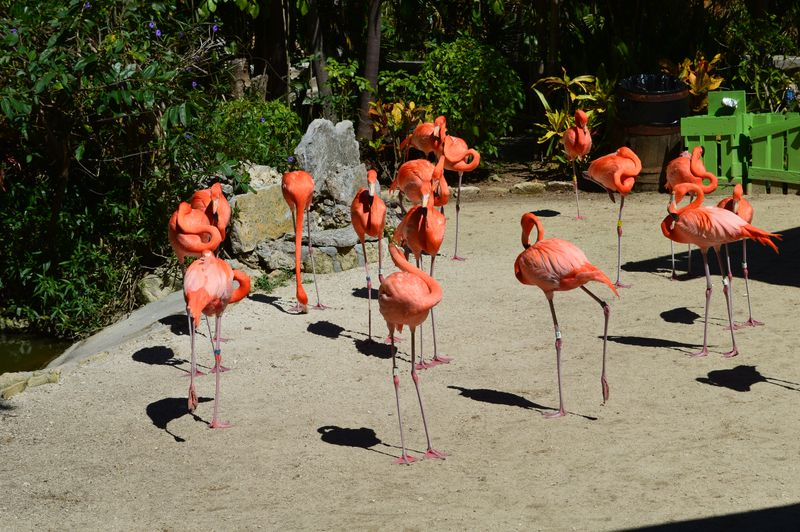 Flamingoes eyeing me cautiously